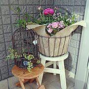 春の花/ガーデニング/寄せ植え/Entrance…などのインテリア実例