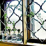 Bathroom/YKKap/多肉植物/水耕栽培/風鈴リメイク/ガラスの雑貨…などのインテリア実例