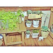 観葉植物/すのこ/多肉植物/リメイク/木箱/100均…などのインテリア実例