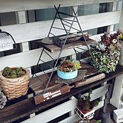 セリア/ワイヤー/100均/DIY/ミニラダーシェルフ/植物…などのインテリア実例