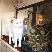玄関ドアリース/NO GREEN NO LIFE/白猫マロたん/ねこと暮らす/すっきり暮らしたい…などのインテリア実例