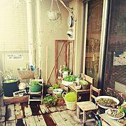 DIY/雑貨/ガーデニング/多肉植物/アンティーク/マンション…などのインテリア実例
