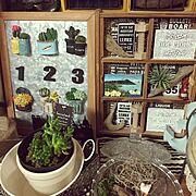 エケベリア/テラコッタ鉢/頂き多肉/リメイク鉢/多肉植物/Bedroom…などに関連する他の写真