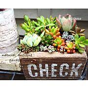 ブロカント/ヒメイワダレソウ/窓枠風DIY/クルミのから/枕木花壇/多肉植物…などに関連する他の写真