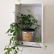 ダイソー/植物/セリア/On Walls…などのインテリア実例