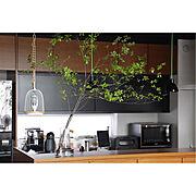 インテリア/ディスプレイ/植物のある暮らし/植物/interior/display…などのインテリア実例