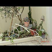 オリーブ/三輪車/オリーブの木/多肉/雑貨/庭…などのインテリア実例
