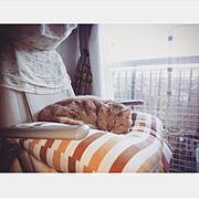 誰かしら寝てる為マッサージ使えません/いいね!押し逃げばかりでごめんなさい。/猫が大好きなんです…などのインテリア実例