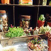 ベランダガーデン/サビサビ/焼き型/サビハウス/寄せ植え/多肉植物…などのインテリア実例