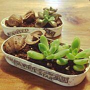 多肉植物/セリア/リメイク/My Desk…などのインテリア実例
