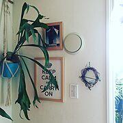 植物/IKEA/ハンドメイド/コウモリラン/NO GREEN NO LIFE/観葉植物…などのインテリア実例