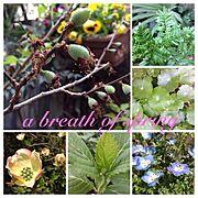 春の息吹のインテリア実例写真