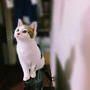 めろ♂/猫のいる暮らし/逢っちゃう会/それでも笑う/何でも笑う/何でも好き…などのインテリア実例