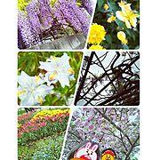 journalstandardfurniture/古材風/賃貸DIY/一人暮らし…などに関連する他の写真