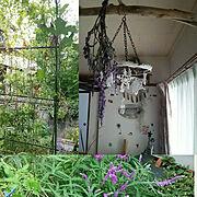 コウモリラン/端材/板付/ドライフラワー/観葉植物/アンティーク…などに関連する他の写真