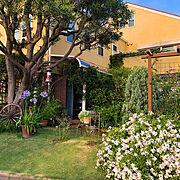 アガパンサス❇︎/プルンバーゴ 白❇︎/庭の花*/梅雨の中休み/ミモザの木/satochan garden*…などのインテリア実例