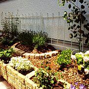 手作り花壇♥︎/ラベンダー/ユーカリポポラス/チェリーセージ/クローバー/アリッサム…などのインテリア実例