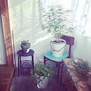 IKEA/多肉植物/リノベーション/植物/観葉植物/DIY…などのインテリア実例