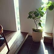 コの字型キッチン/シンプル/無垢の床/ザ・チェア/ウンベラータ/キッチンタイル張り…などのインテリア実例