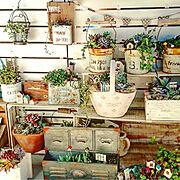 ほっこり*/多肉植物の寄せ植え/朝の風景/多肉植物/植木鉢/ベランダガーデン…などのインテリア実例