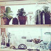 雑貨/棚 DIY/窓際/植物/ボタニカルライフ/ボタニカル…などのインテリア実例