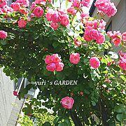 バラが好き/Entrance…などのインテリア実例