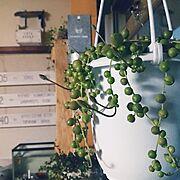 tyaちゃん♥/Nana40Nちゃん♥/グリーンネックレス/NO GREEN NO LIFE/【植中毒】…などのインテリア実例