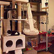 Instagramやってます/ヤマボウシ/仔犬印ティーポット/中庭のある家…などに関連する他の写真