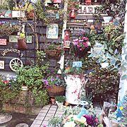 Entrance/リメイク缶/gardening/NO GREEN NO LIFE/パンジーとビオラ…などのインテリア実例