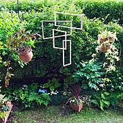 モビール/風を見る/中と外をつなげる/アートのある暮らし/小さな庭/花のある暮らし…などのインテリア実例