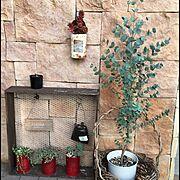 多肉植物/DIY/リメ缶/ガーデニング/ユーカリ/Entrance…などのインテリア実例