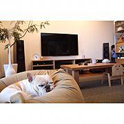無印良品/ステンレスユニットシェルフ/無垢の床/わんこと暮らす家/フレンチブルドッグ/リトルベイビー…などのインテリア実例