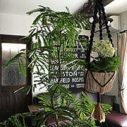 かご/植物/ベランダ/エアコン/室外機カバー/DIY室外機カバー…などに関連する他の写真