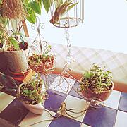 Bathroom/レトロ/シャビー加工/植物のある暮らし/ハンドメイド/ナチュラルインテリア…などに関連する他の写真