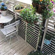 ビオラ寄せ植え/ベランダガーデン/ガーデンテーブルセット/紫陽花/オダマキ/クラッスラ紅稚児…などのインテリア実例