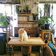 猫/猫ベット/ペット/ペットと楽しむインテリア/ペットまわり/ペットインテリア…などに関連する他の写真