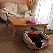 クッキーさん/猫/爪研ぎソファ/Lounge…などのインテリア実例