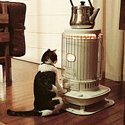 ストーブ/猫のいる暮らし/猫/コロナストーブ/Lounge…などのインテリア実例