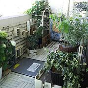 DIY/アナベル/ダイソー/DIY棚/Entrance…などのインテリア実例