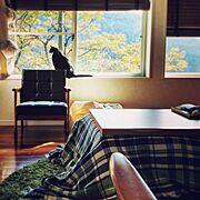 ねこ部/ねこと暮らす。/ねこのいる日常/ワッフル編みのモコモコ感大好きです/ケットをコタツカバーに…などのインテリア実例