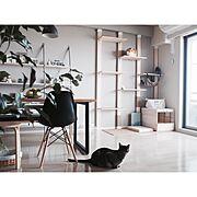 イームズシェルチェア/ダイニングテーブル/WALPA壁紙/壁紙 グレー/壁紙DIY…などのインテリア実例