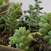 多肉植物/ハーブ栽培/観葉植物/ナチュラル/北欧/かべがみや本舗さん…などに関連する他の写真