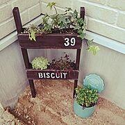 庭未完成/寄せ植え初心者/寄せ植え/クローバー/アイビー/はしご…などのインテリア実例