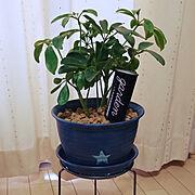 セリア/ダイソーの鉢リメイク/カポック/植物用活力剤カバー/いいね&フォローありがとうございます☆/RCの出会いに感謝♡…などのインテリア実例
