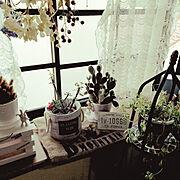 7maroちゃん♪/出窓/観葉植物のある暮らし/動物好き♥/猫のいる暮らし/犬のいる暮らし…などのインテリア実例