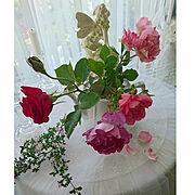 バラ/雑貨/庭の花/花のある暮らし/2018.5.22/My Desk…などのインテリア実例