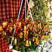 artek/ハンギング/観葉植物/吹き抜け/シンプル/北欧…などに関連する他の写真