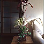 観葉植物/多肉植物/植物/Lounge…などのインテリア実例