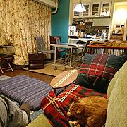 猫と私の部屋のインテリア実例写真