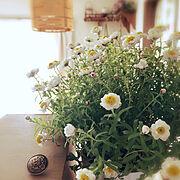 Lounge/花かんざしきれいに咲いてます♡/RCの出会いに感謝♡/当たり前の生活がいちばんの幸せ♡…などのインテリア実例